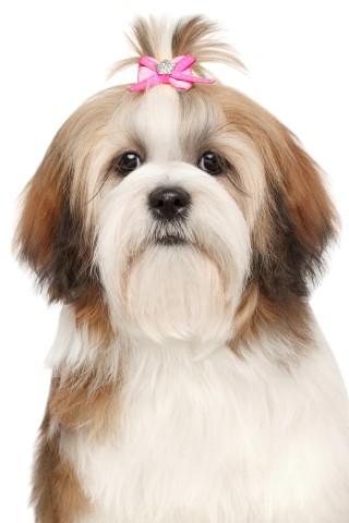 Trimsalon honden hondentrimsalon Ijsselstein